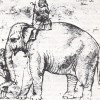 Hanno, The Pope's Elephant 1510